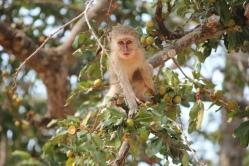 Baby Vervet Monkey, Kissama National Park, Angola