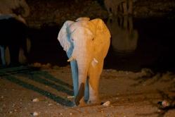 Elephant at the watering hole at night, Etosha National Park, Namibia