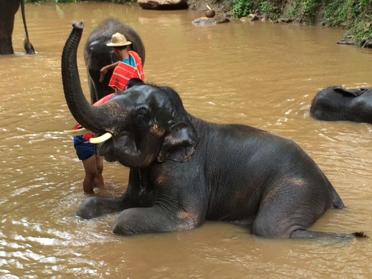 Elephant Bath, Mae Sa Elephant Camp