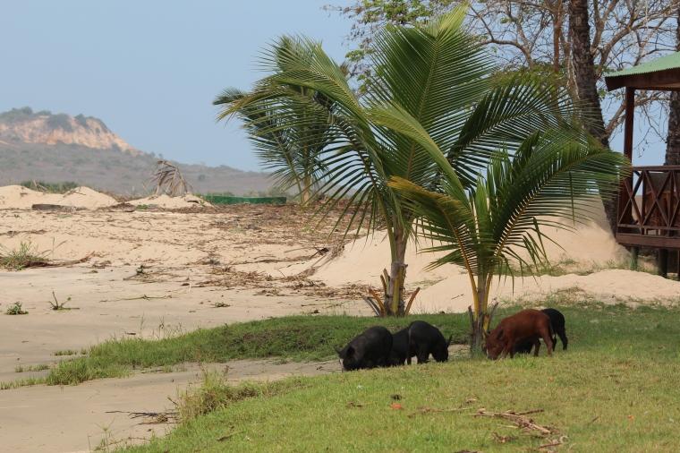 Rio Kwanza