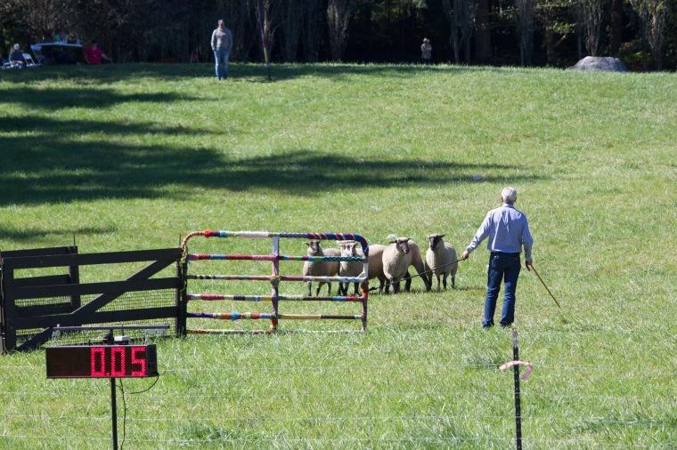 Vashon Sheepdog Classic