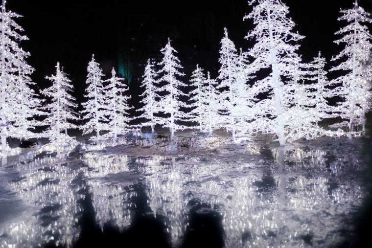 Enchant Christmas Light Maze