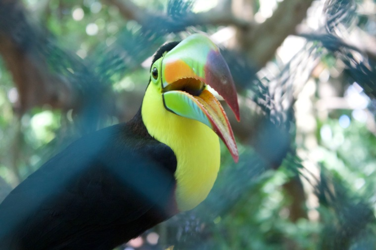 Toucan outside the bird aviary! Me...inside!